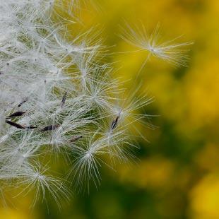 Allergien behandeln in Wiesbaden, Pollen, Atemwege, Haut beim HNO, Salia Osman